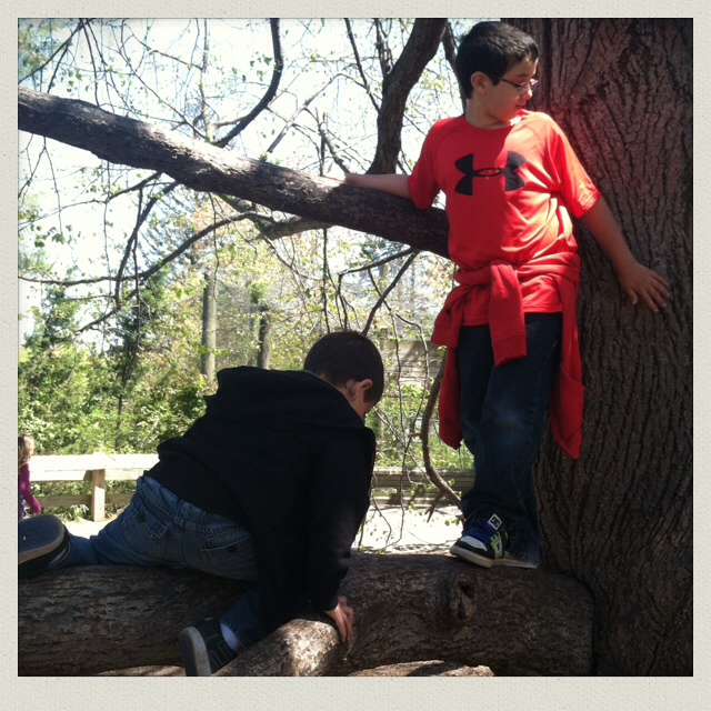 tree-climbing-boys-roger-williams-zoo-providence-RI