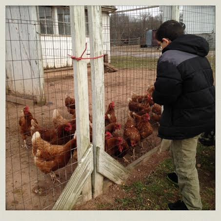 fish-family-farm-chicken-coup-feeding
