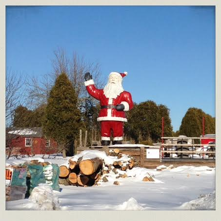 20-foot-santa-rehoboth-tree-farm