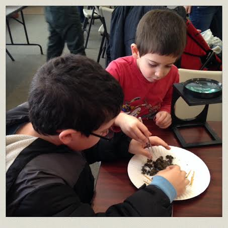 South-Shore-Natural-Science-Center-dissecting-owl-pellet