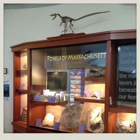 South-Shore-Natural-Science-Center-eco-room