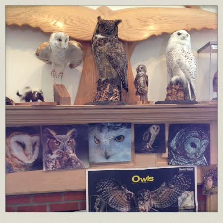 South-Shore-Natural-Science-Center-owl-display