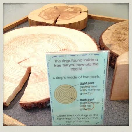 South-Shore-Natural-Science-Center-tree-rings
