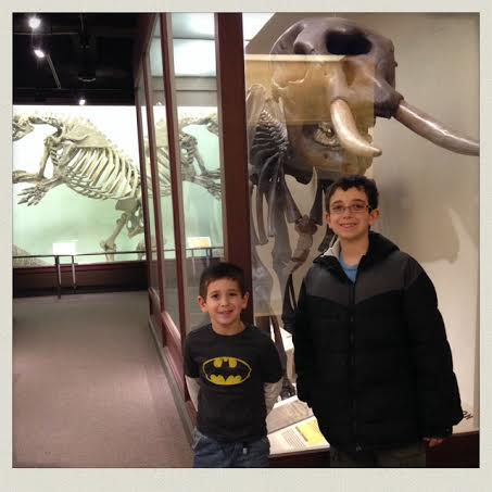 harvard-natural-history-museum-fossil-mammoth