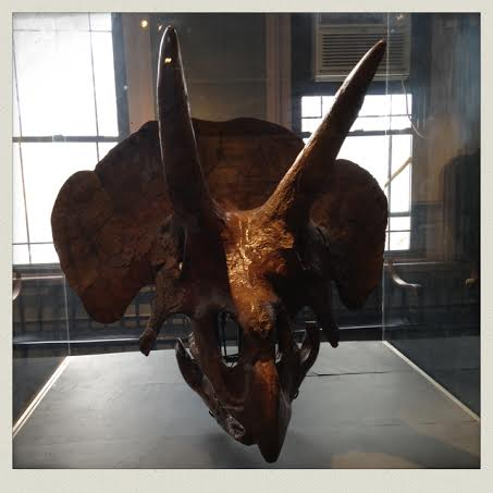 harvard-natural-history-museum-fossil-triceratops