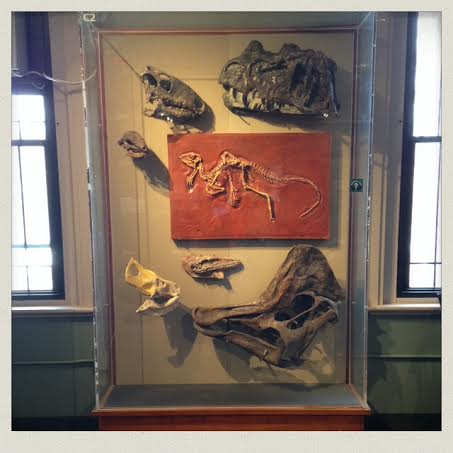 harvard-natural-history-museum-fossils-case