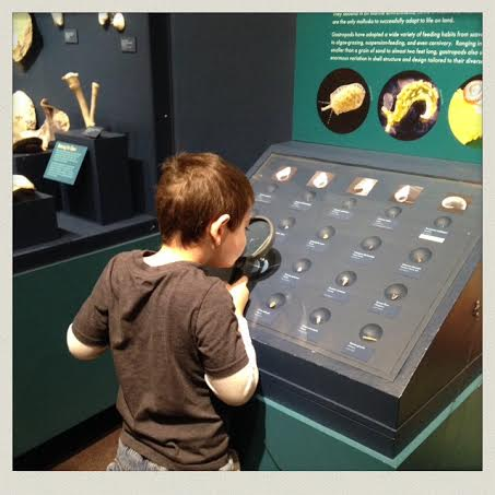 harvard-natural-history-museum-interactive exhibits