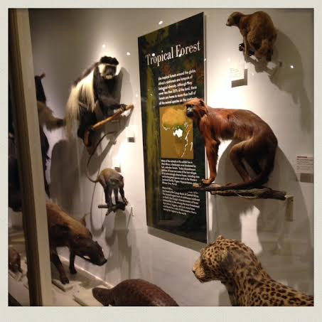 harvard-natural-history-museum-taxidermy-animals-case