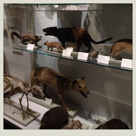 harvard-natural-history-museum-taxidermy-animals-case2