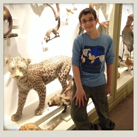 harvard-natural-history-museum-taxidermy-animals-jaguar