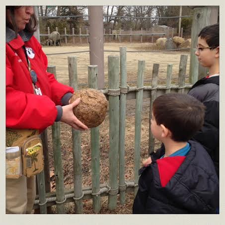 holding-elephant-poop-roger-williams-zoo-rhode-island-both-looking