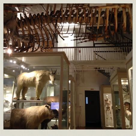 harvard-museum-of-natural-history-animals