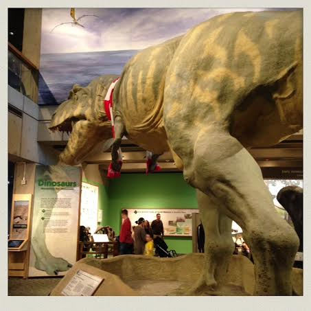 museum-of-science-boston-t-rex