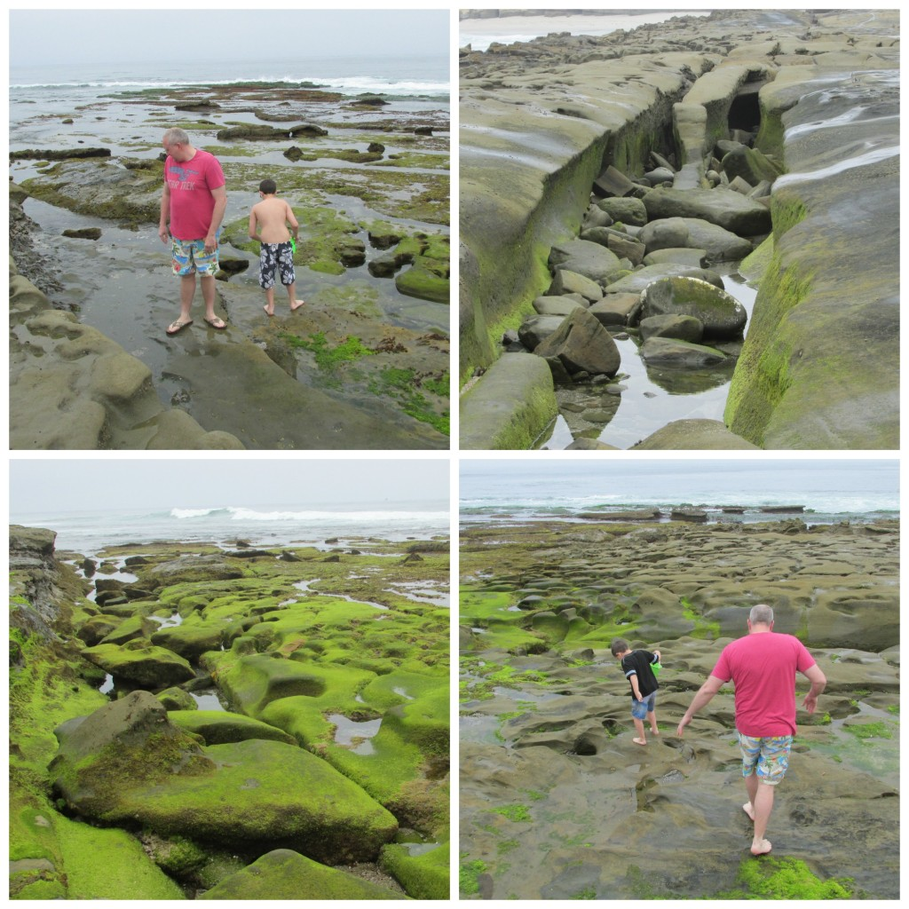 la jolla tidepool collage 2