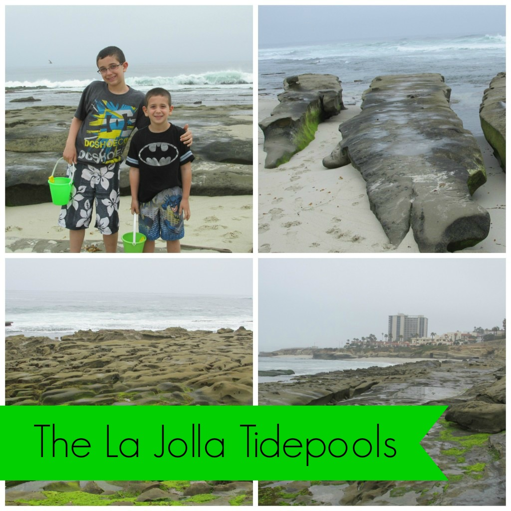 la-jolla-tidepool-collage1-1024x1024