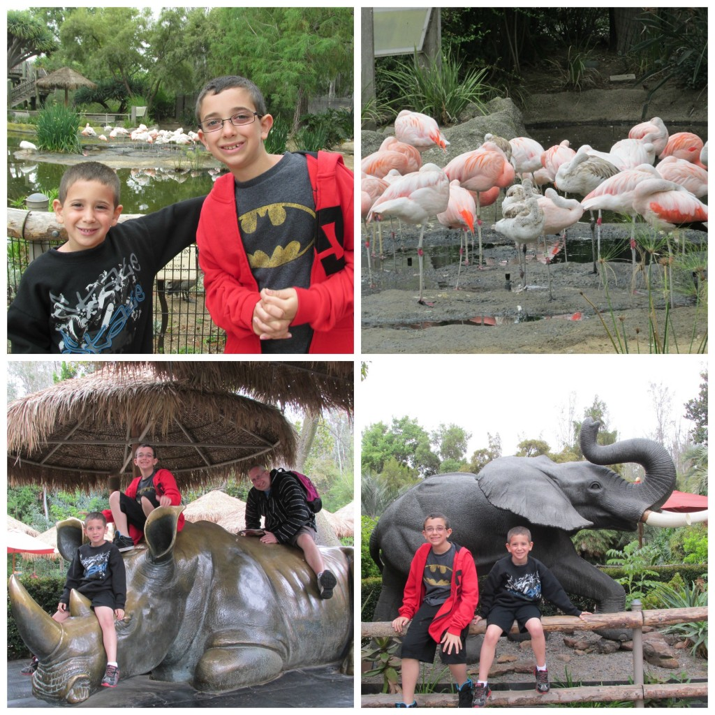 safari park collage