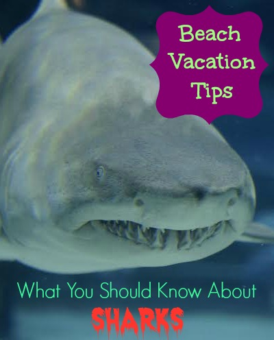 Beach Vacation Tips -  What You Should Know About Sharks