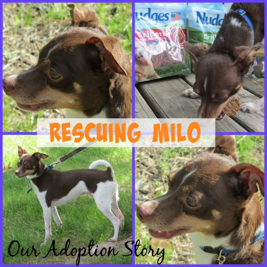 Rescuing Milo Our Adoption Story
