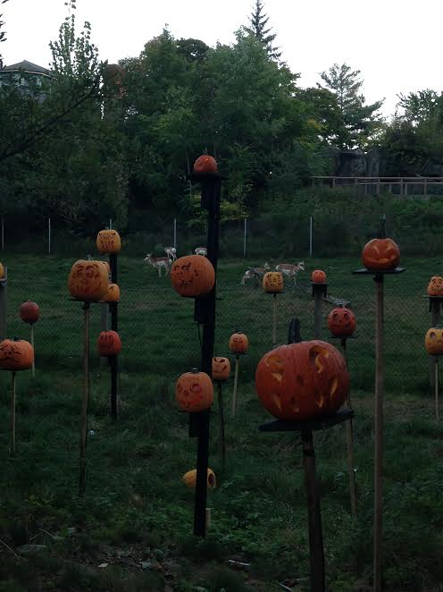 the-2016-jack-olantern-spectacular-at-roger-williams-park-zoo3