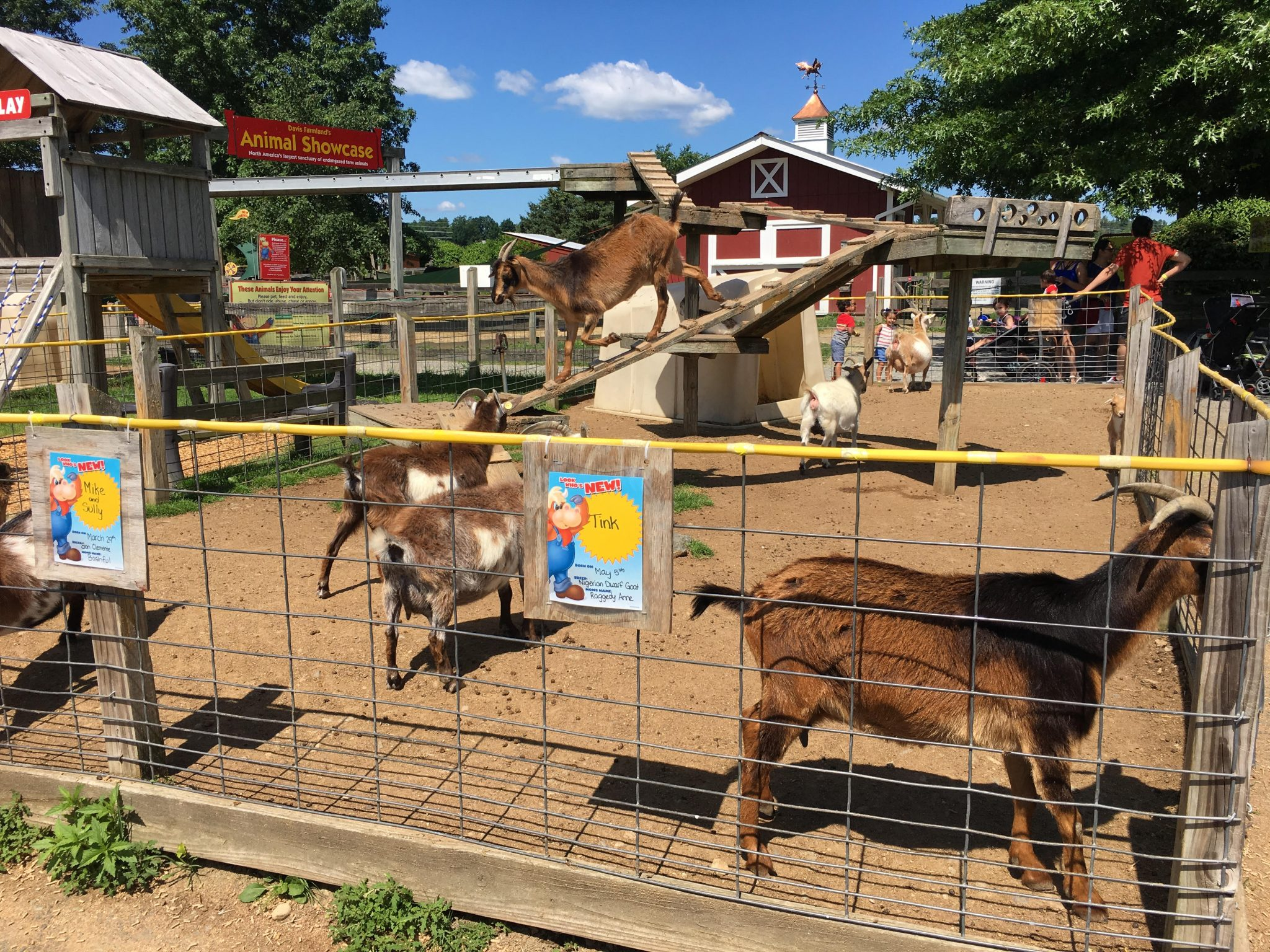 For a fun summer outing with the family, visit Davis Farmland in Sterling, MA