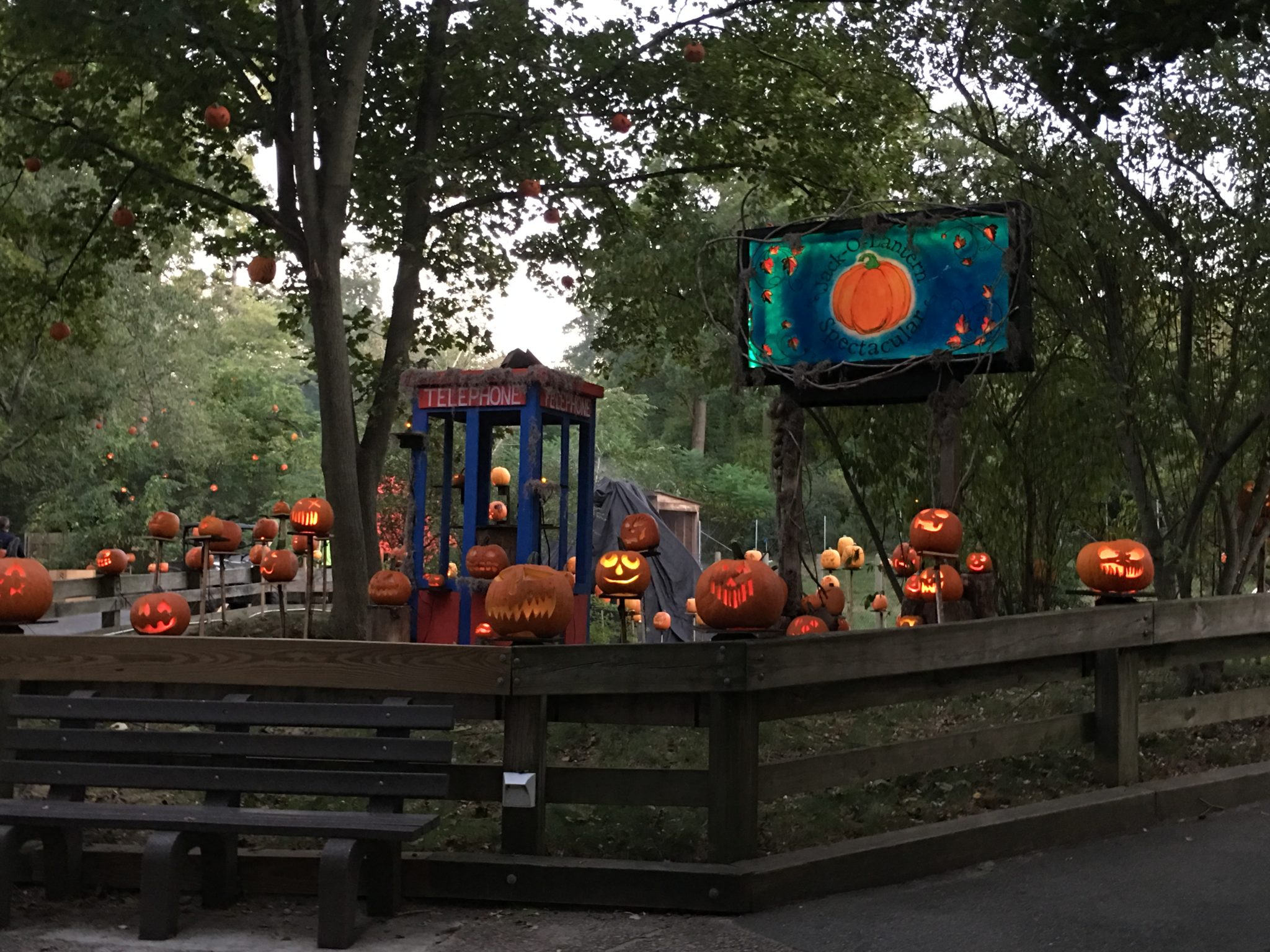 he Jack O'Lantern Spectacular is a nighttime display of 5,000 illuminated jack-o-lanterns all along the zoo's beautiful Wetlands Trail.