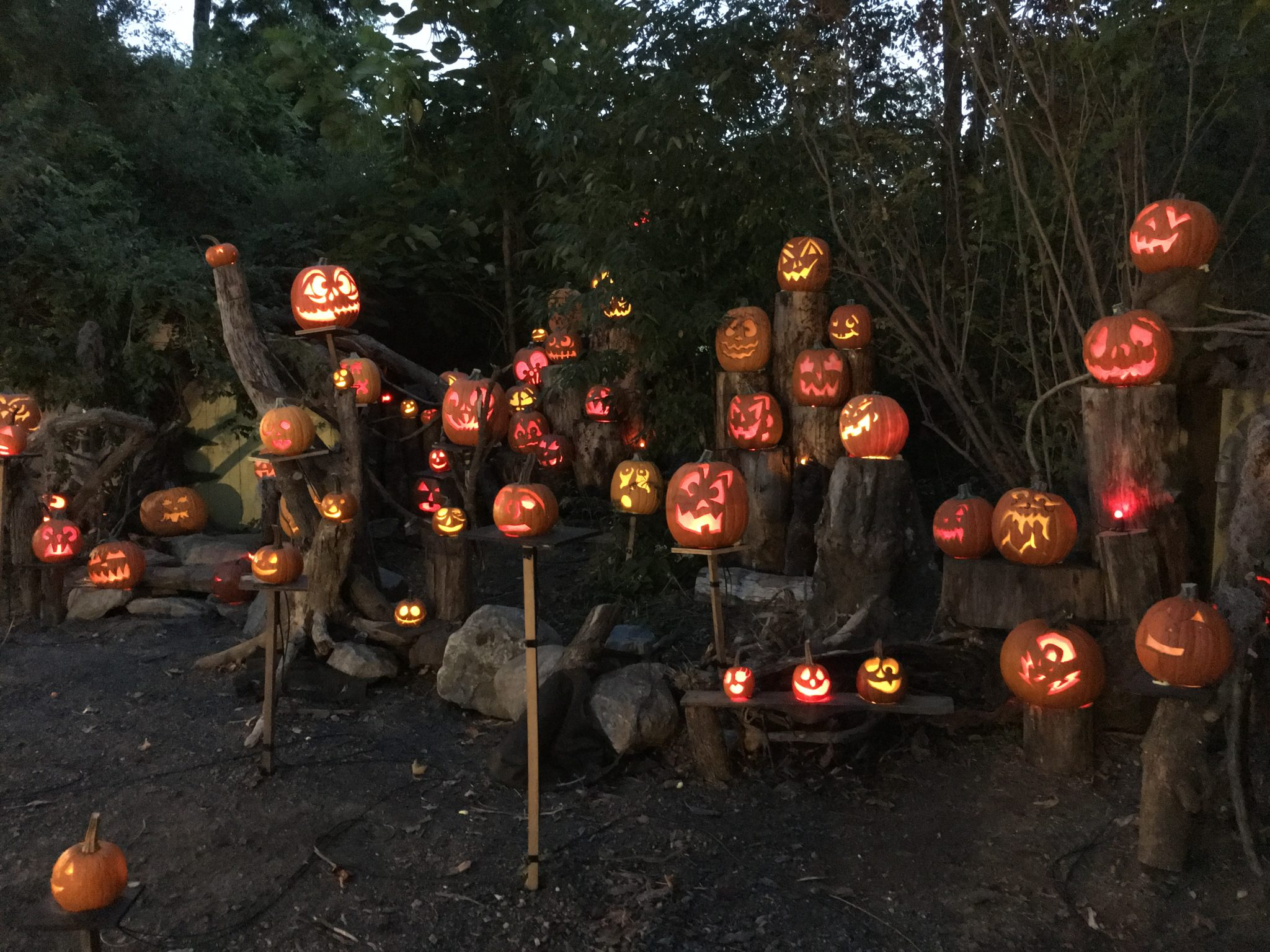 The Jack O'Lantern Spectacular is a nighttime display of 5,000 illuminated jack-o-lanterns all along the zoo's beautiful Wetlands Trail.