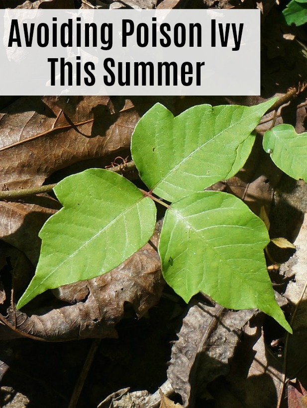 This shiny, invasive vine results in an extremely itchy rash that spreads rapidly and seems to take forever to go away, can be avoided if you know what to look for. Here are some tips for staying away from poison ivy this summer, and what to do if you get it.