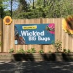 Wicked BIG Bugs is open NOW at Franklin Park Zoo! This is your chance to get up close and personal with some giant animatronic bugs and much more!