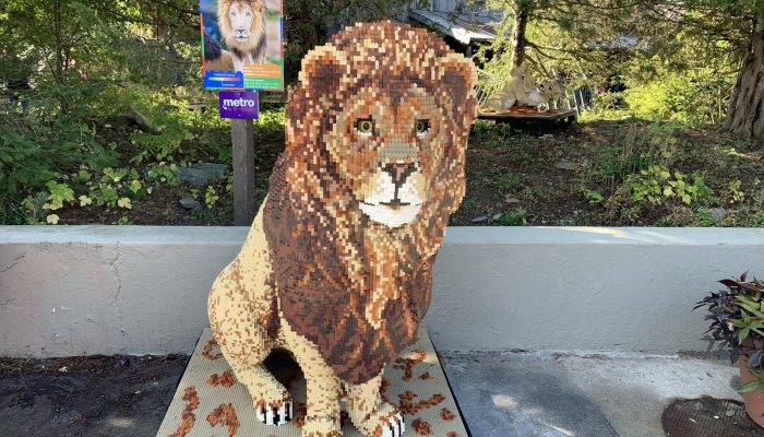Head to the Stone Zoo now through January 5th to go on a safari! A Brick Safari! You'll see over 40 life sized Lego animal sculptures as you explore the zoo!